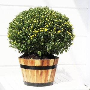 Chậu gỗ tròn trồng cây, trồng rau, trồng hoa