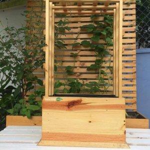 Hộp gỗ trồng cây thân leo GG50252994