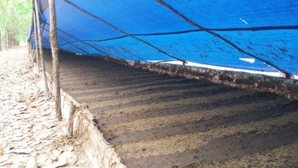 Sản xuất phân trùn quế hoàn toàn tự nhiên