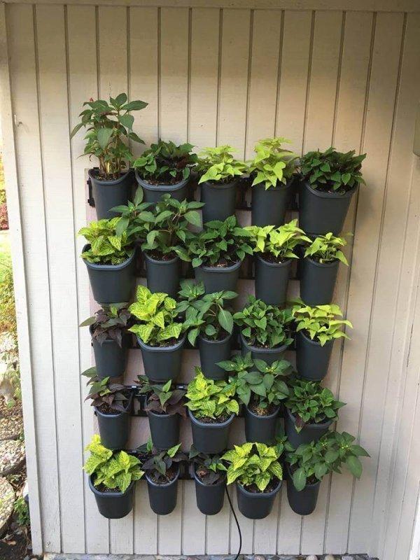 Trồng cây, làm vườn trên tường có khó không
