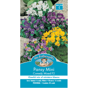 Hat hoa Pansy Mini Mix màu