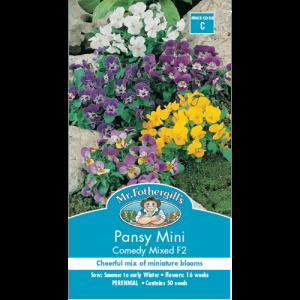 Hat hoa Pansy Mini Mix màu
