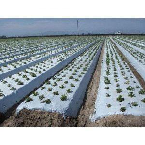 màng phủ nông nghiệp sapaco