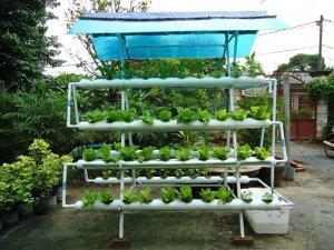 Trồng cây với hệ thống thủy canh