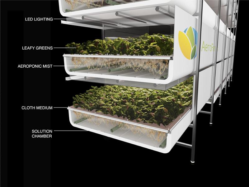 Mô hình trồng rau ở AeroFarms