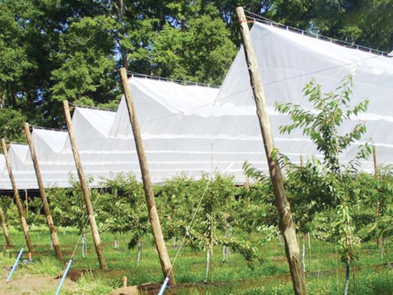 Màng phủ nông nghiệp Solarig RGR