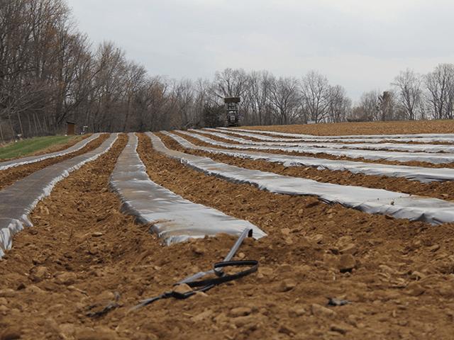 Màng phủ nông nghiệp bạc phản quang