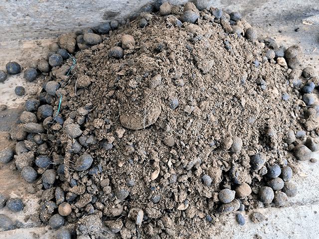 Làm thế nào để ủ phân dê làm phân bón cho cây trồng trong vườn của bạn?