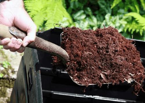 Mách-lẻo-cho-bạn-cách-trồng-rau-bằng-bón-phân-dơi