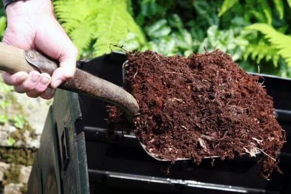 Cách ủ phân dê bón cây trồng