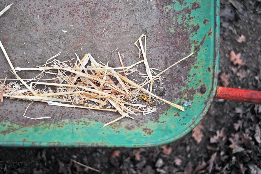 Cách ủ phân dê làm phân bón cho cây trồng