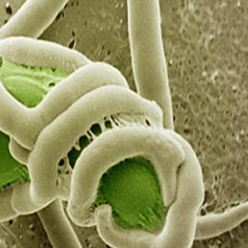 Nấm Trichoderma kết hợp phân dê bón cho cây lan