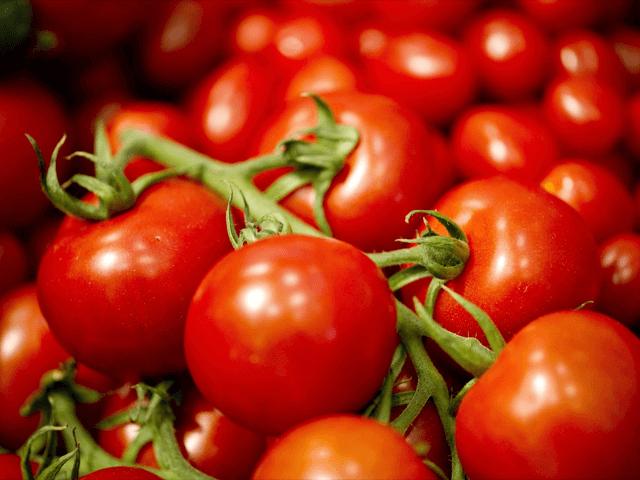 Bạt phủ nông nghiệp cho cà chua